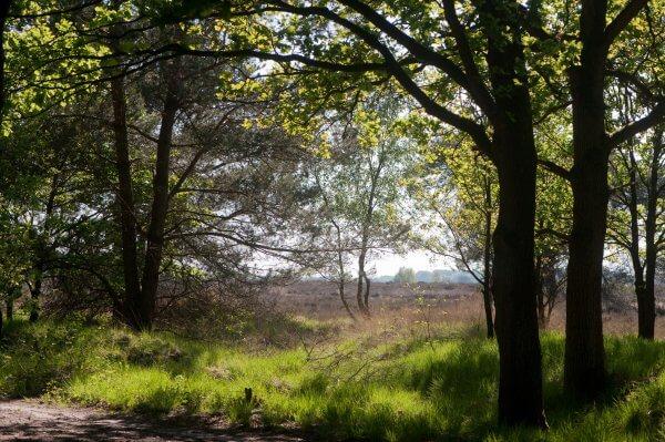 Workshop het open landschap